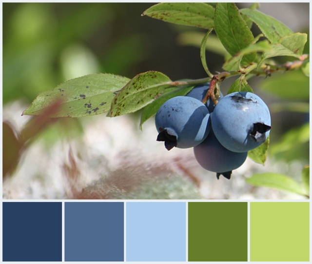 Blueberries Color Palette
